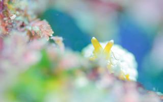 0301zenigatafusieragai shiho.jpg