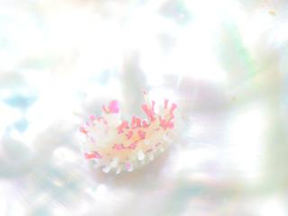 0529senhimeumiushi kodukue.jpg